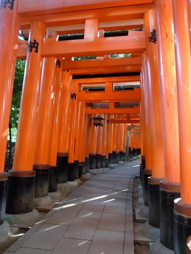 Toriis Fushimi Inari Kyoto